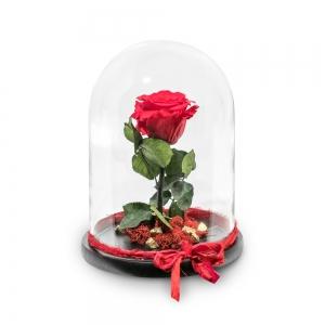 Κόκκινο τριαντάφυλλο σε μεγάλη γυάλινη καμπάνα