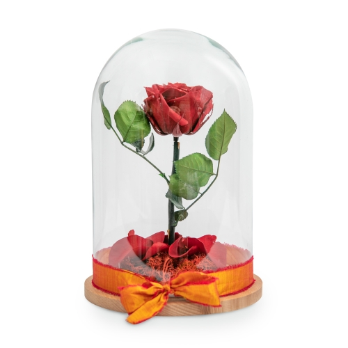 Red forever roses in a glass bell