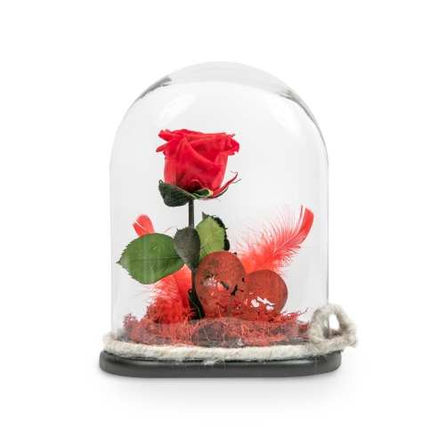 Red forever rose with feathers in glass bell