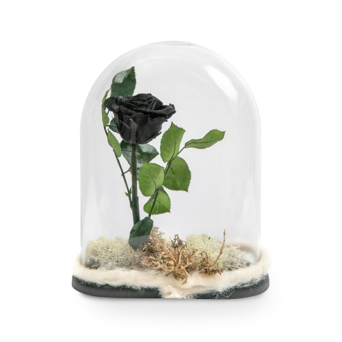 Black forever rose in a glass bell